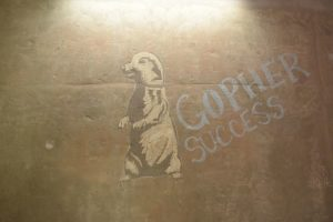 "A chalk drawing of a gopher on a concrete wall next to the tag line ""Gopher Success"""